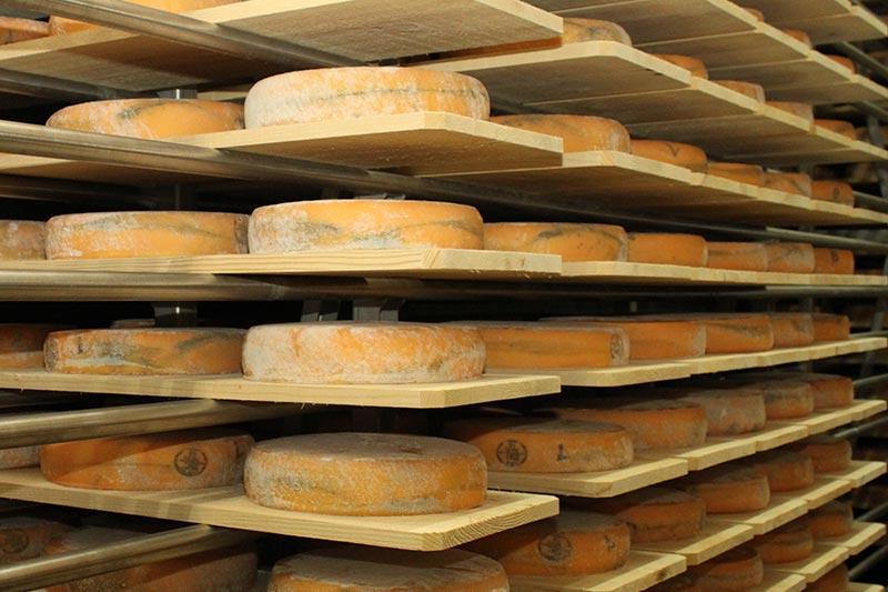 Affinage des Morbiers à la fromagerie Monnin à Chantrans dans le Doubs